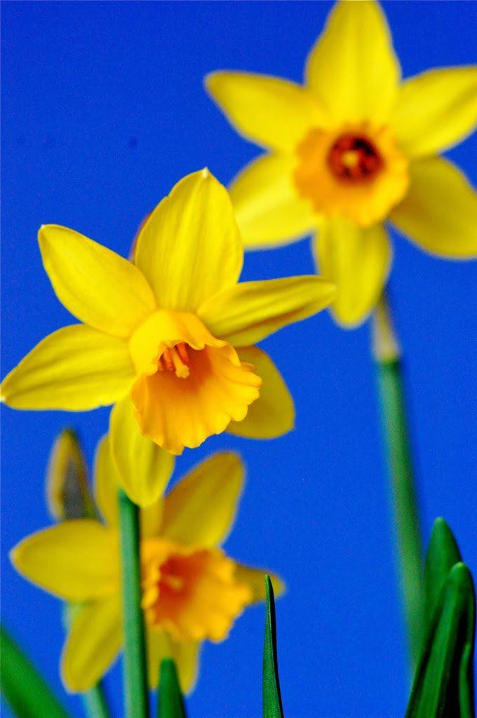 Spring Bucket List 2014