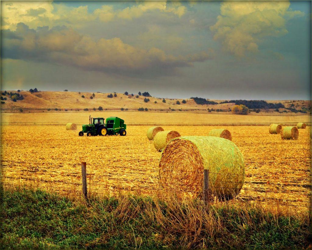 Attend Harvest Festival at school – An Autumn Bucket List Update