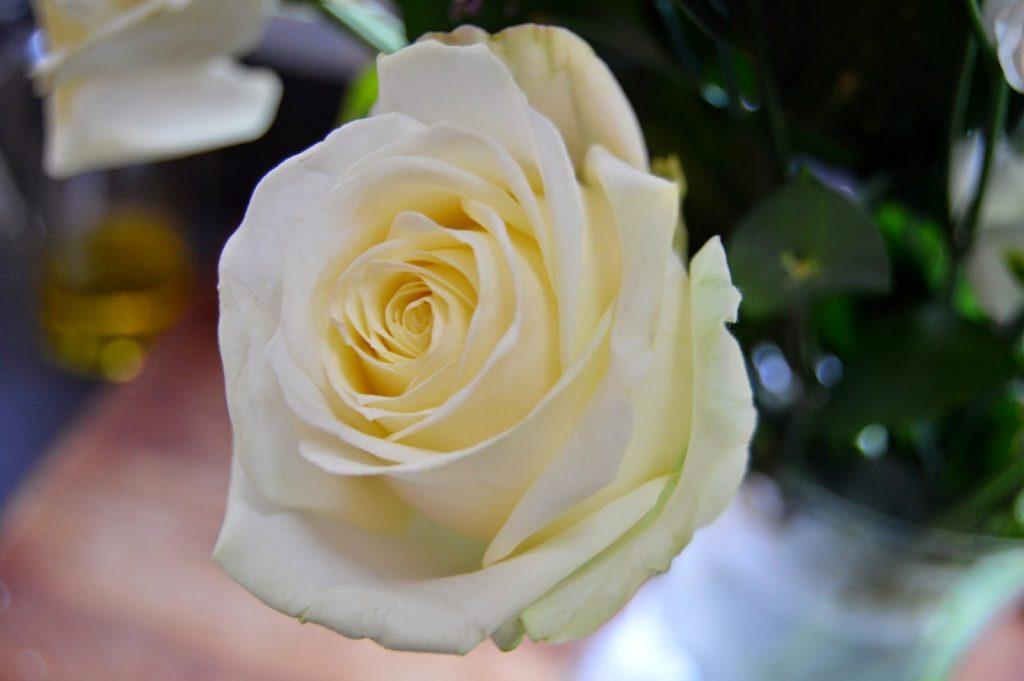 Debenhams flowers - rose