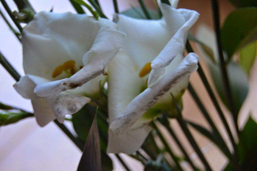 Debenhams flowers - some damage