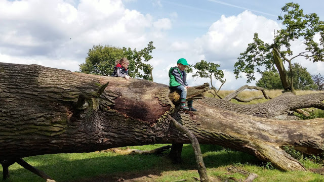 Climbing fallen trees in Tatton Park