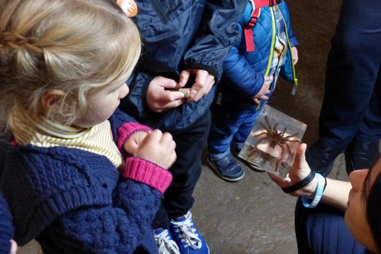 The Enchantment of Chester Zoo - Tarantula