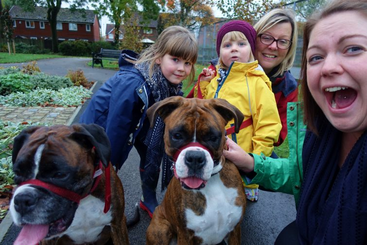 Family walking two boxers