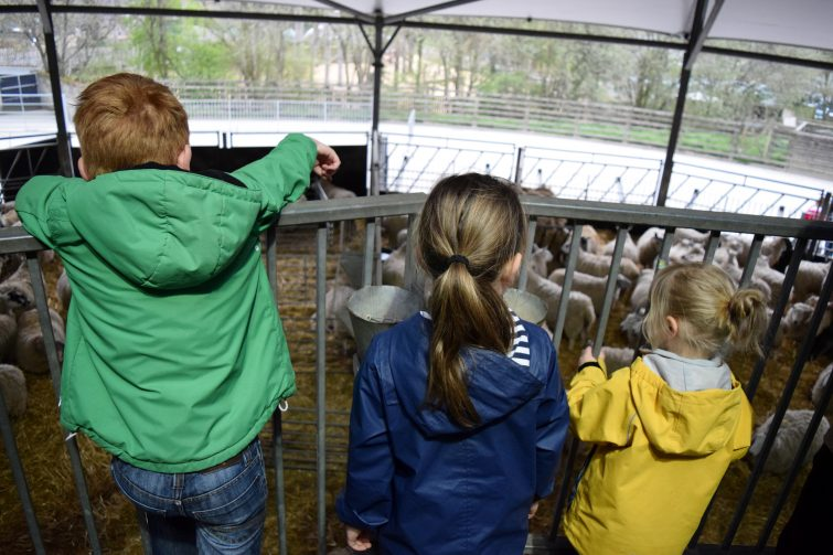 Cannon Hall Farm - watching lambs being born on the raised platforms