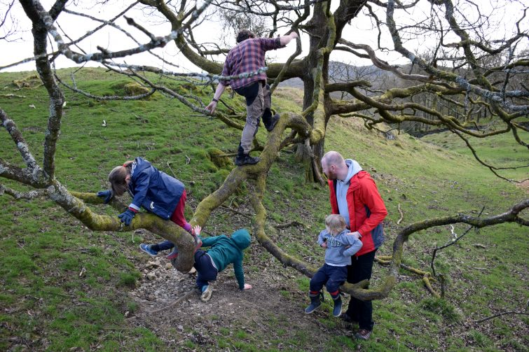 tree climbing at Woodsmoke
