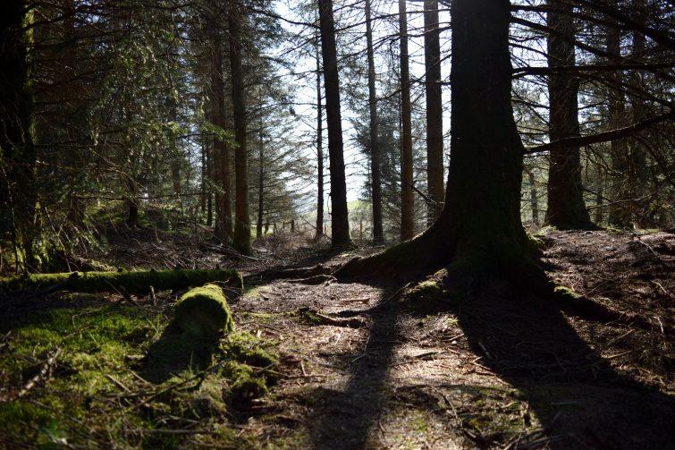 Woodsmoke in the sunshine