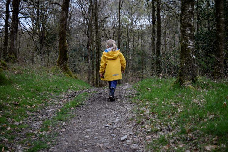 A woodland walk with Ben McNutt, Woodsmoke