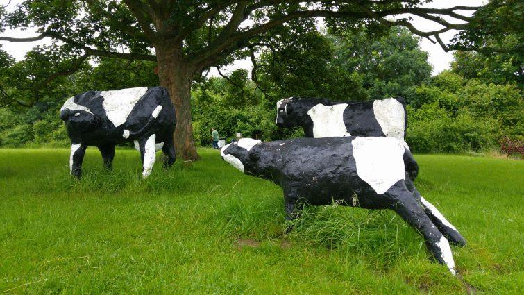 Concrete cows in Milton Keynes