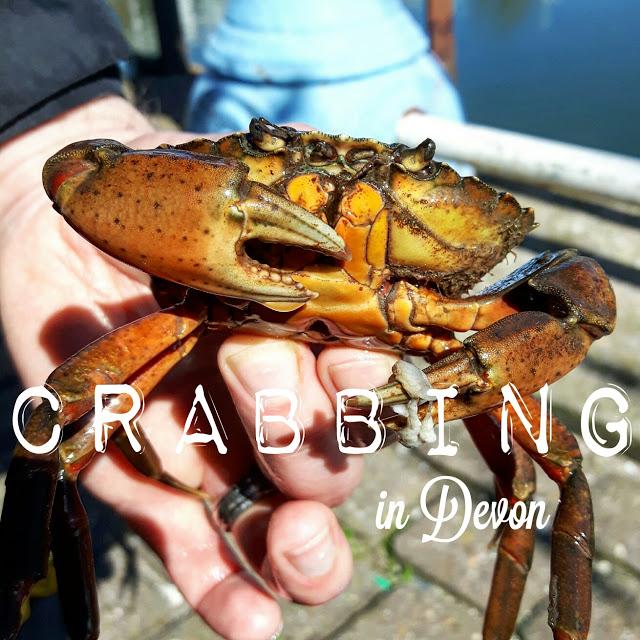 Crabbing in Devon