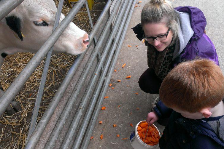 Feeding cows at Reddish Vale Farm