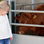 Reddish Vale Farm - calves