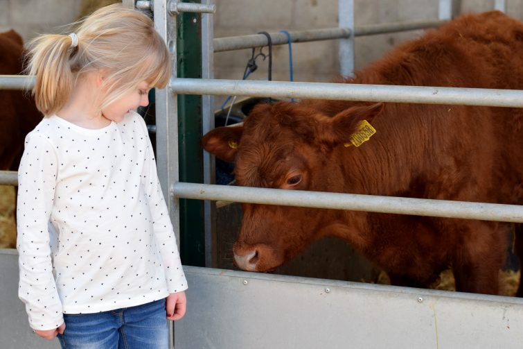 Reddish Vale Farm – Perfect for Under 5s!