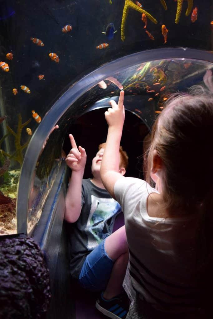 TraffordCity SEA LIFE Centre - nemo tank