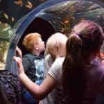 Trafford City SEA LIFE centre - finding nemo