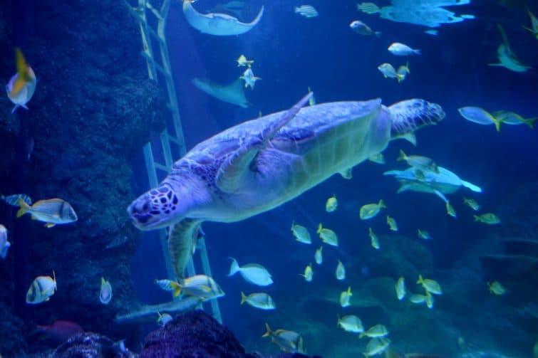 TraffordCity SEA LIFE turtles
