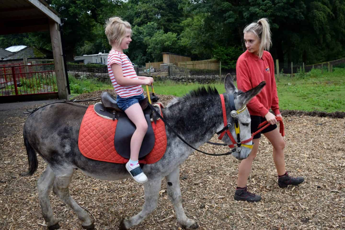 Little girl riding a donkey at Smithills Farm