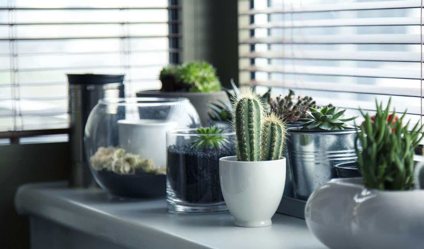 Collection of house plants on a window ledge