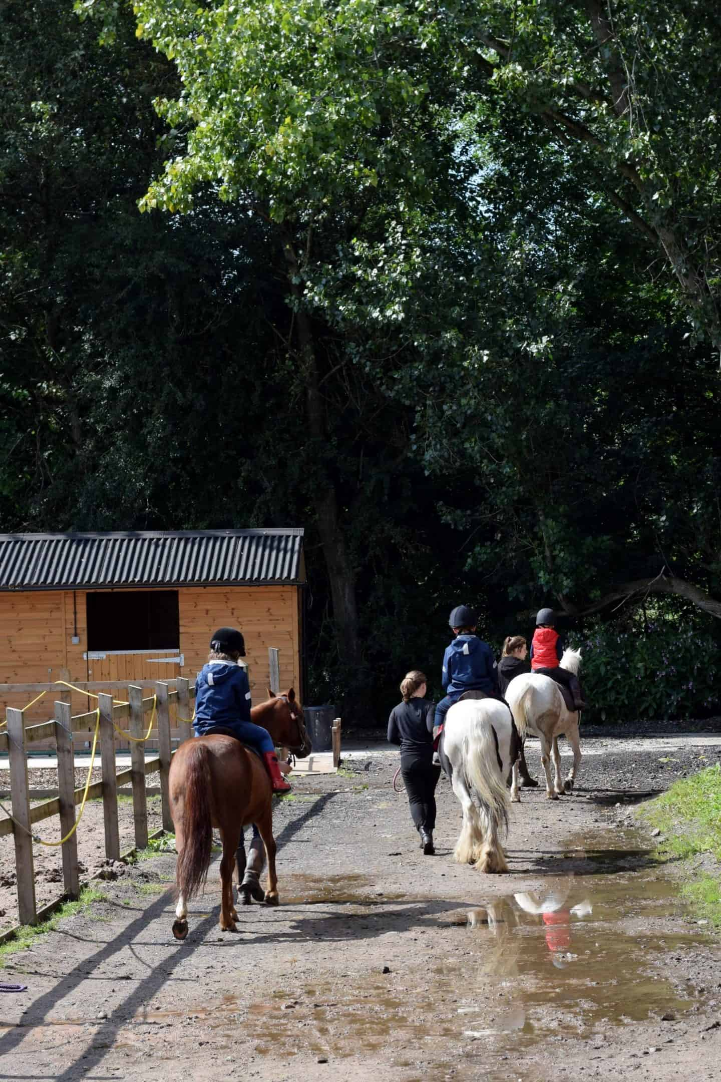 Horse riding lessons - £15 for half an hour